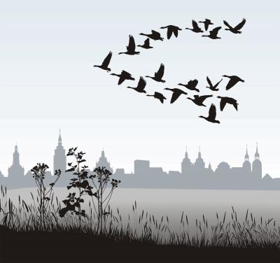migración de datos